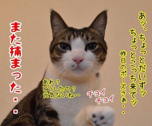 めんどうなのよッ 猫の写真で4コマ漫画 4コマ目ッ