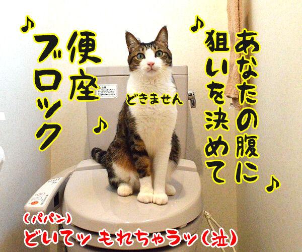 あなたの風邪はどこから? 猫の写真で4コマ漫画 4コマ目ッ
