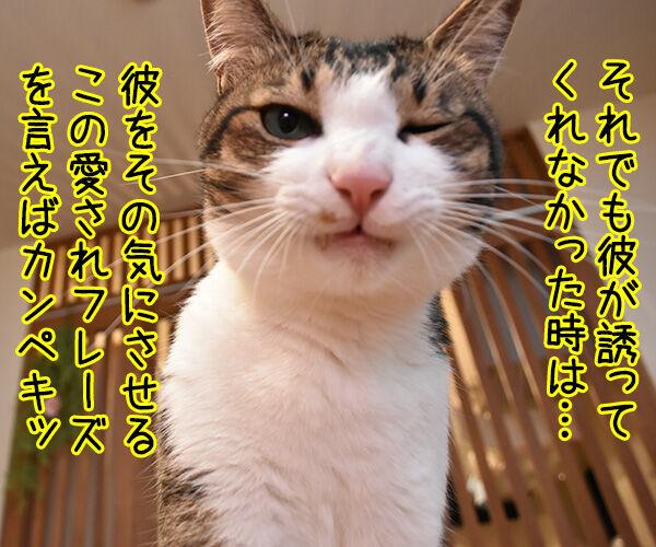 デートに誘って欲しい… 彼をその気にさせるアイテムとは? 猫の写真で4コマ漫画 3コマ目ッ