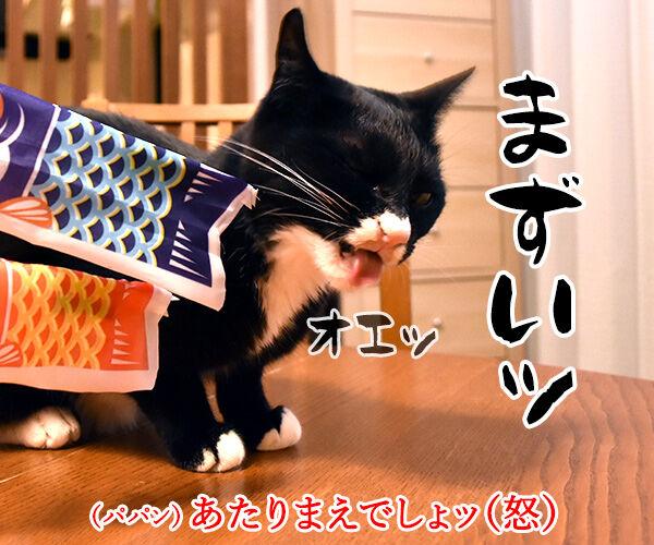 端午の節句だから鯉のぼりを飾りましょーッ 猫の写真で4コマ漫画 3コマ目ッ