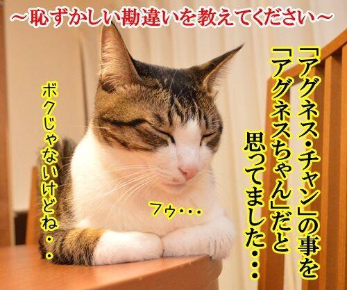 恥ずかしい勘違い 其の二 猫の写真で4コマ漫画 1コマ目ッ