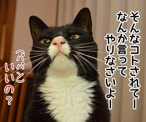 認めないオンナ 猫の写真で4コマ漫画 3コマ目ッ