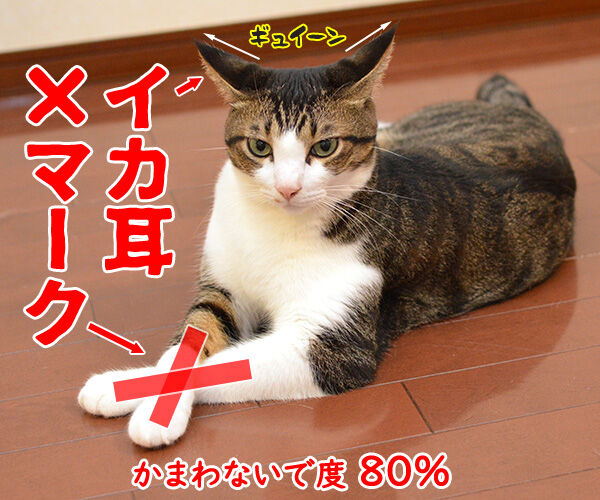 パパンが思う猫さんの「かまわないで」サイン 猫の写真で4コマ漫画 2コマ目ッ
