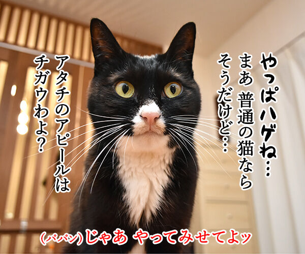 猫さんがアピールするときの鳴き方は? 猫の写真で4コマ漫画 3コマ目ッ