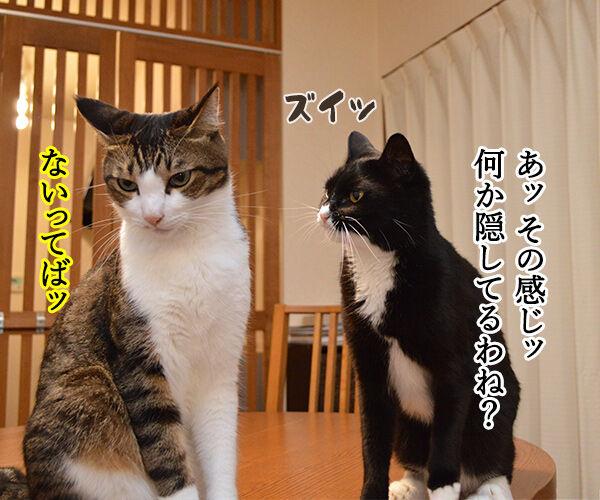 隠してなぁい? 猫の写真で4コマ漫画 2コマ目ッ