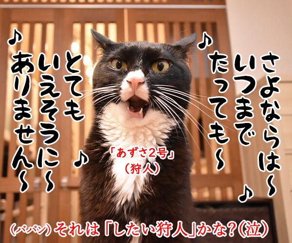 劇場版シティハンターは大ヒット上映中なのよッ 猫の写真で4コマ漫画 4コマ目ッ