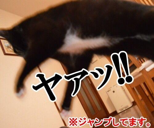 ハイテンションなアタチ 猫の写真で4コマ漫画 1コマ目ッ