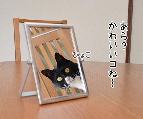 鏡の中の 猫の写真で4コマ漫画 1コマ目ッ