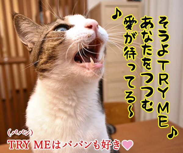 安室ちゃんの歌でどれが好き? 猫の写真で4コマ漫画 2コマ目ッ