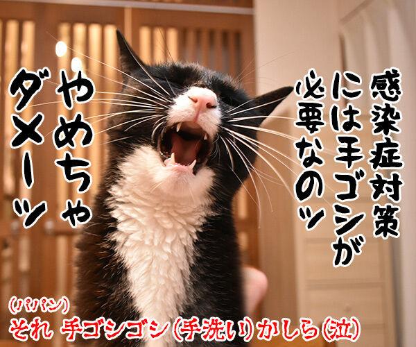 手越くんがジャニーズ事務所をやめちゃったのよッ 猫の写真で4コマ漫画 4コマ目ッ
