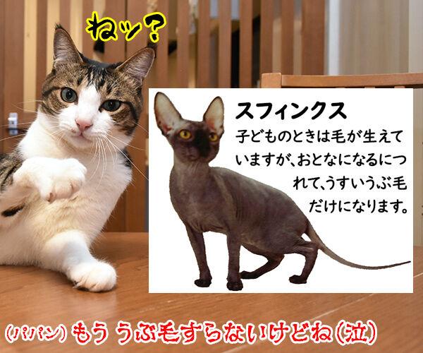 ハッピーセットのおまけでネコのなかまの図鑑がもらえるのッ 猫の写真で4コマ漫画 4コマ目ッ