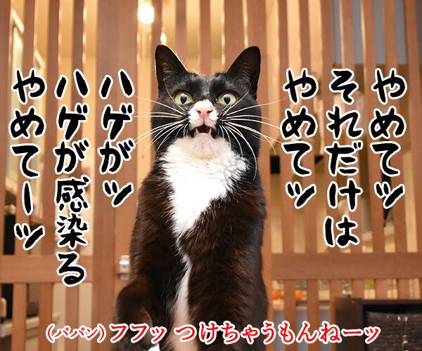 だいずさんのキーホルダーができたのよッ 猫の写真で4コマ漫画 2コマ目ッ