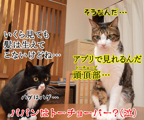 パパンは大掃除しないでYoutubeなのッ 猫の写真で4コマ漫画 4コマ目ッ