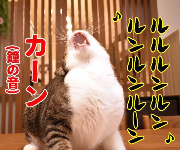 のど自慢大会 其の二 猫の写真で4コマ漫画 3コマ目ッ