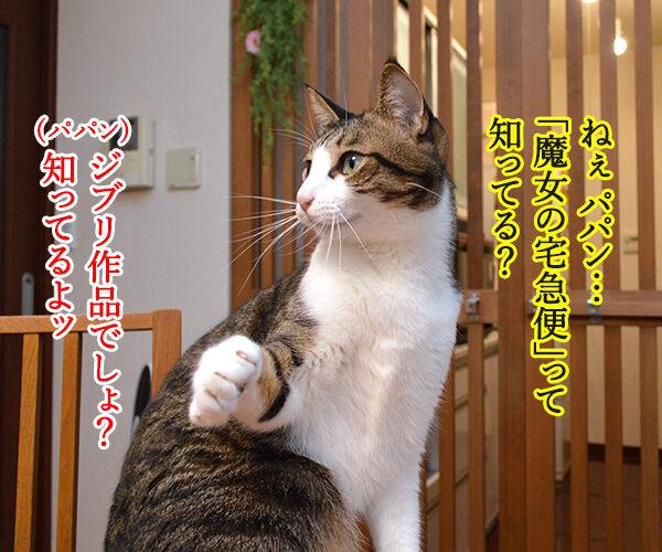 「魔女の宅急便」を見たのよッ 猫の写真で4コマ漫画 1コマ目ッ