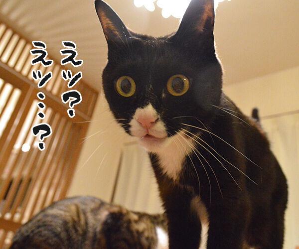 去年とは違ってるもの 猫の写真で4コマ漫画 2コマ目ッ