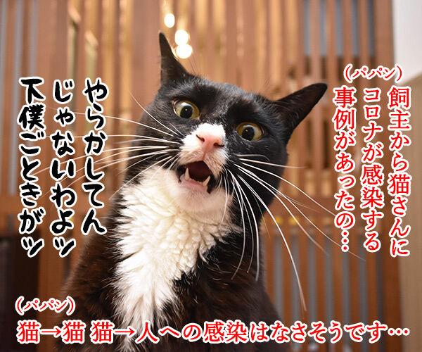 飼主から猫さんにコロナが感染しちゃったのよッ 猫の写真で4コマ漫画 1コマ目ッ