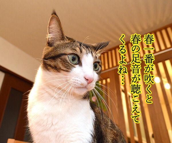 春一番が吹くと『春の足音』が聴こえるのッ 猫の写真で4コマ漫画 1コマ目ッ