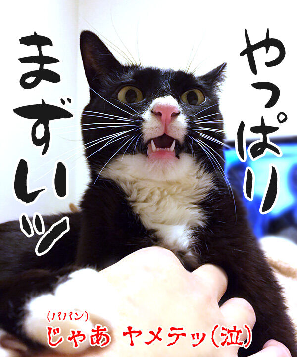 パパンのおててをガブリエル 猫の写真で4コマ漫画 4コマ目ッ