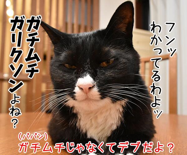 ガリガリガリクソンが飲酒運転で逮捕されたんですってッ 猫の写真で4コマ漫画 3コマ目ッ