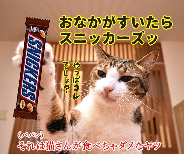 おなかがすいたらスニッカーズよねッ 猫の写真で4コマ漫画 2コマ目ッ