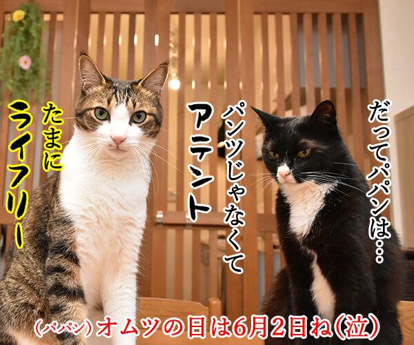8月2日は何の日かしら? 猫の写真で4コマ漫画 4コマ目ッ