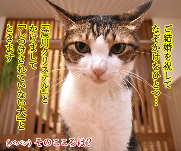 小泉進次郎さん 滝川クリステルさん ご結婚オメデトゴザマース 猫の写真で4コマ漫画 2コマ目ッ