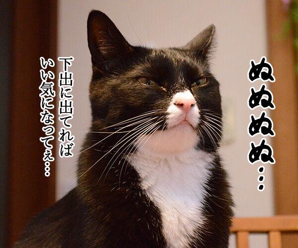 エビキャッチ 其の二 猫の写真で4コマ漫画 1コマ目ッ