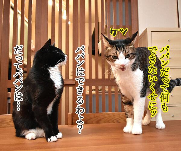 ボクだって芸できるもんッ 猫の写真で4コマ漫画 3コマ目ッ