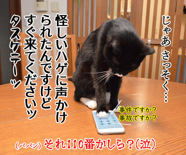 「いかのおすし」って知ってる? 猫の写真で4コマ漫画 4コマ目ッ