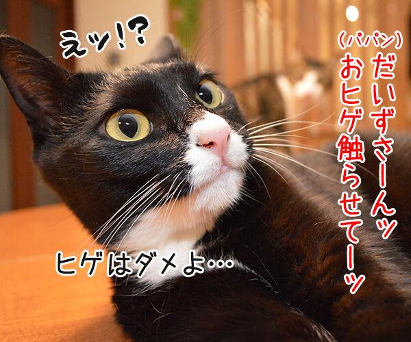 だいずの秘密 猫の写真で4コマ漫画 1コマ目ッ