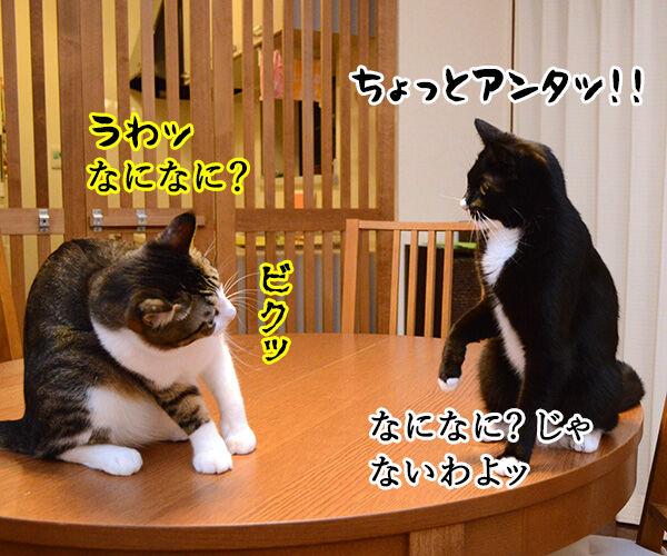 疑惑 其の三 猫の写真で4コマ漫画 1コマ目ッ
