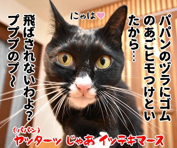 台風だから行きたくないわー 猫の写真で4コマ漫画 4コマ目ッ