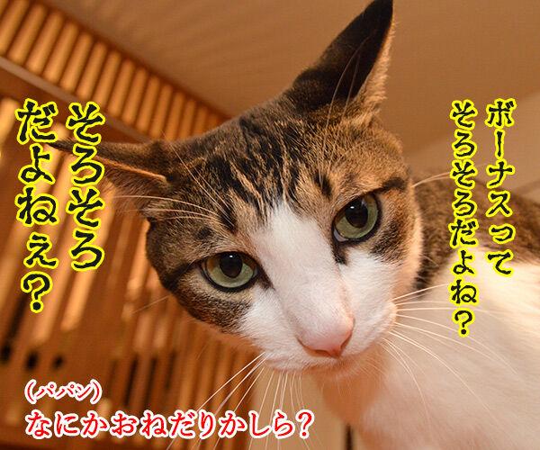 ボーナスを預けるならこの銀行よねッ 猫の写真で4コマ漫画 1コマ目ッ