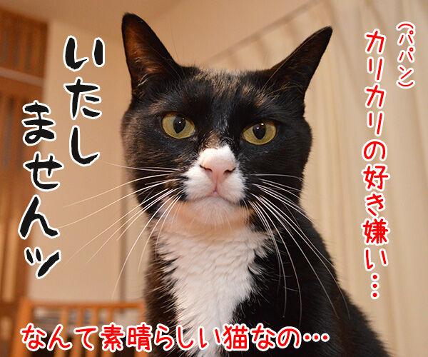 ドクターX 其の二 猫の写真で4コマ漫画 3コマ目ッ
