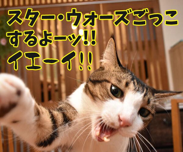 スター・ウォーズごっこするよーッ 猫の写真で4コマ漫画 1コマ目ッ