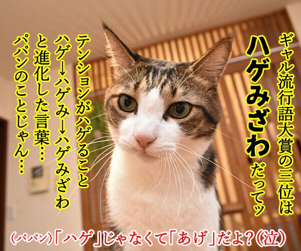 ギャル流行語大賞2018 『いい波のってんね~』 猫の写真で4コマ漫画 1コマ目ッ