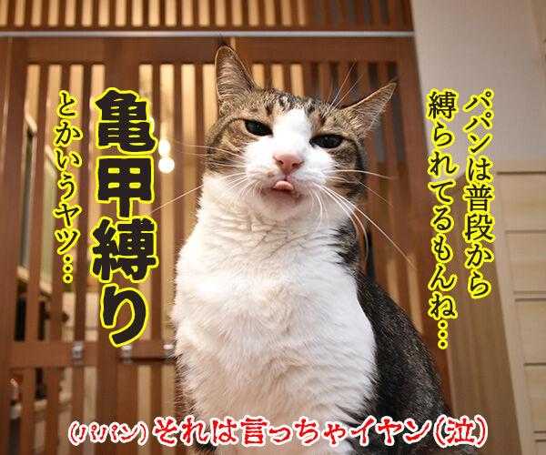 きょうは『防災の日』なんですってッ 猫の写真で4コマ漫画 4コマ目ッ