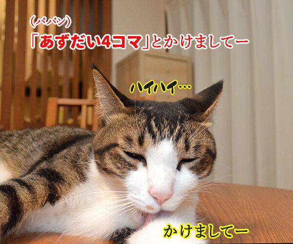 今日から4年目突入デースッ 猫の写真で4コマ漫画 2コマ目ッ