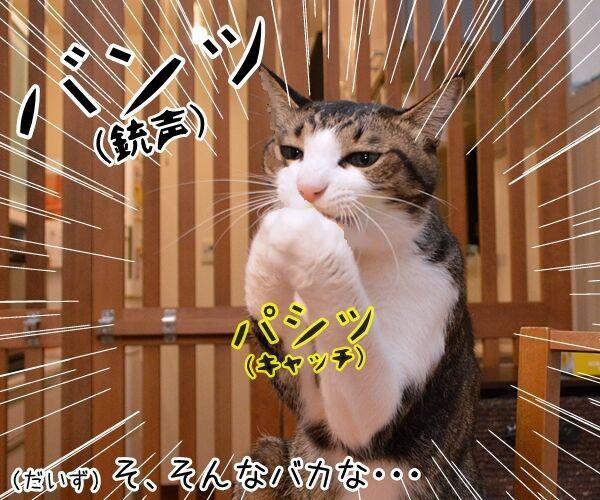 寒くなってきたからアレしなくちゃねッ 猫の写真で4コマ漫画 2コマ目ッ