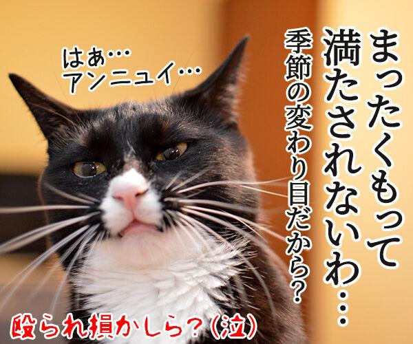 ちょっと来てッ 猫の写真で4コマ漫画 4コマ目ッ