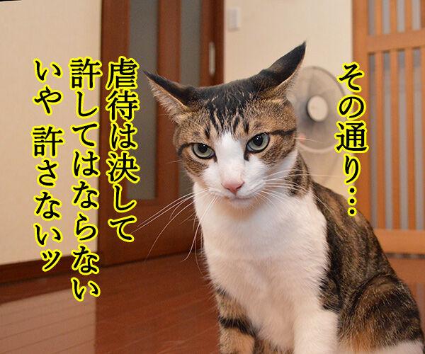 虐待は許さないッ 猫の写真で4コマ漫画 3コマ目ッ