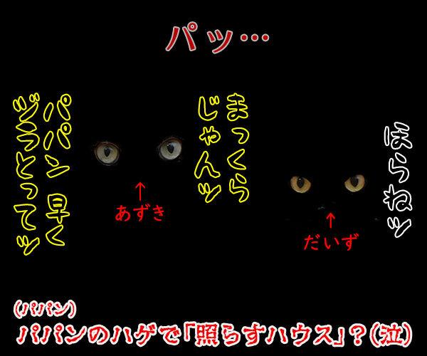 TERRACE HOUSE に出てみたいのよッ 猫の写真で4コマ漫画 4コマ目ッ