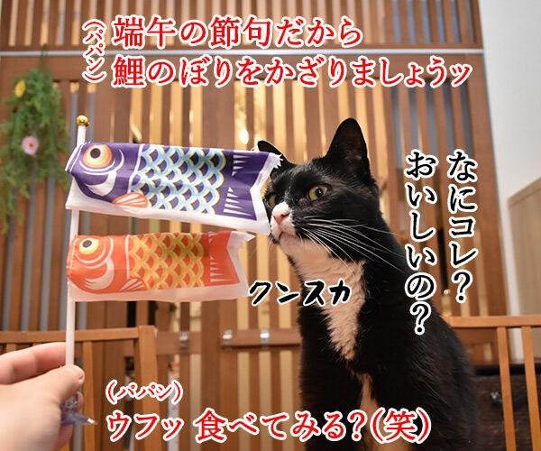 端午の節句だから鯉のぼりを飾りましょーッ 猫の写真で4コマ漫画 1コマ目ッ