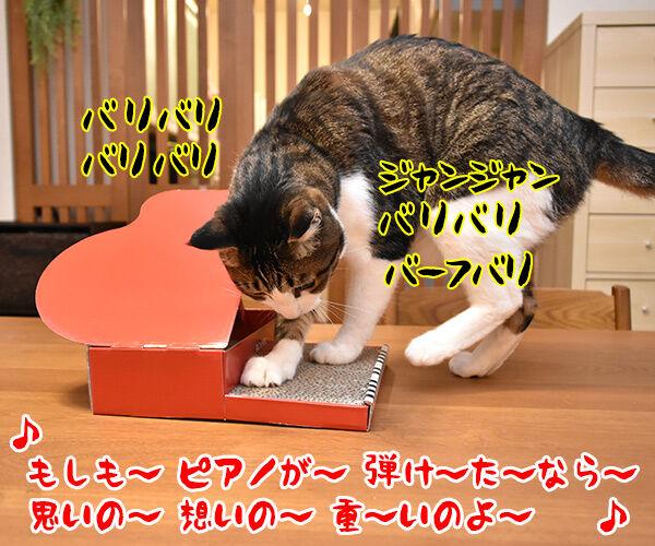 ねこのきもちの付録は『カリカリ 爪とぎ ねこピアノ』なのッ 猫の写真で4コマ漫画 2コマ目ッ