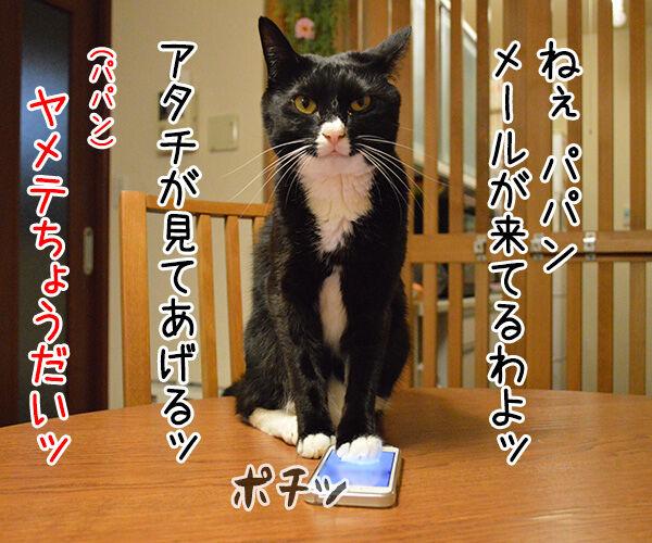 迷惑メール 猫の写真で4コマ漫画 1コマ目ッ