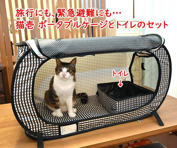 きょうは『防災の日』なんですってッ 猫の写真で4コマ漫画 5コマ目ッ