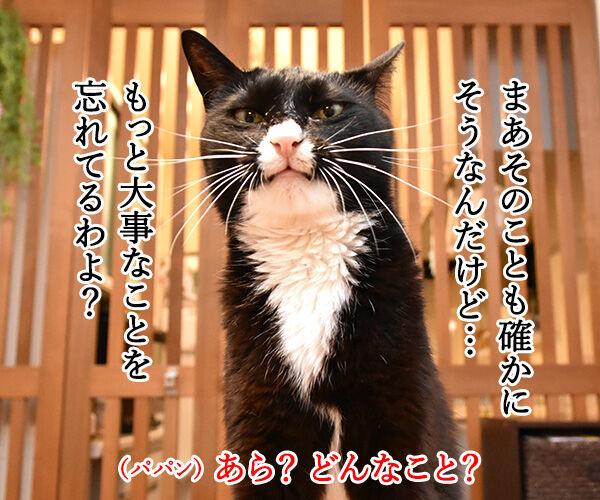 台風接近時にしてはいけないこと 猫の写真で4コマ漫画 3コマ目ッ