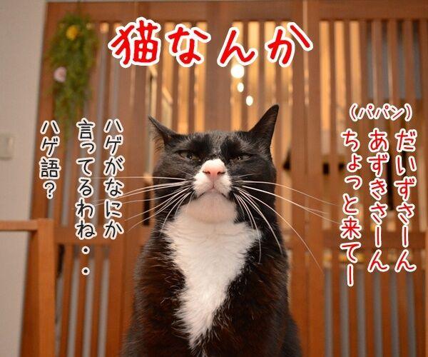 猫なんかよんでもこない。 猫の写真で4コマ漫画 1コマ目ッ