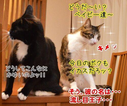 彼の名は… 猫の写真で4コマ漫画 4コマ目ッ